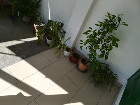 A szobanövények az udvarra kirakva élvezik a friss levegőt