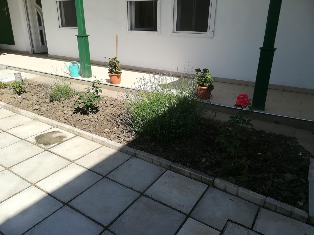 Udvaron ültetett virágok